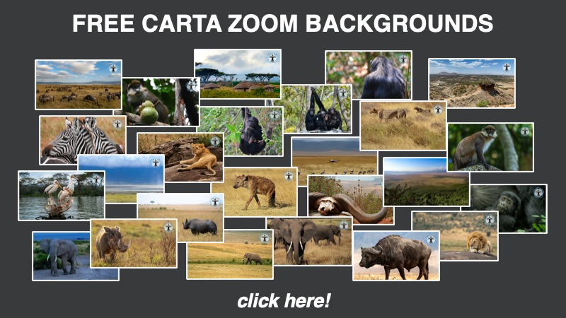 Free CARTA Zoom Backgrounds