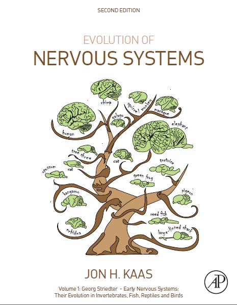 evolution of mirror neuron mechanism in primates