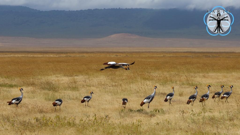 Location: Ngorongoro Conservation Area, Tanzania. Photo credit: Linda Nelson.