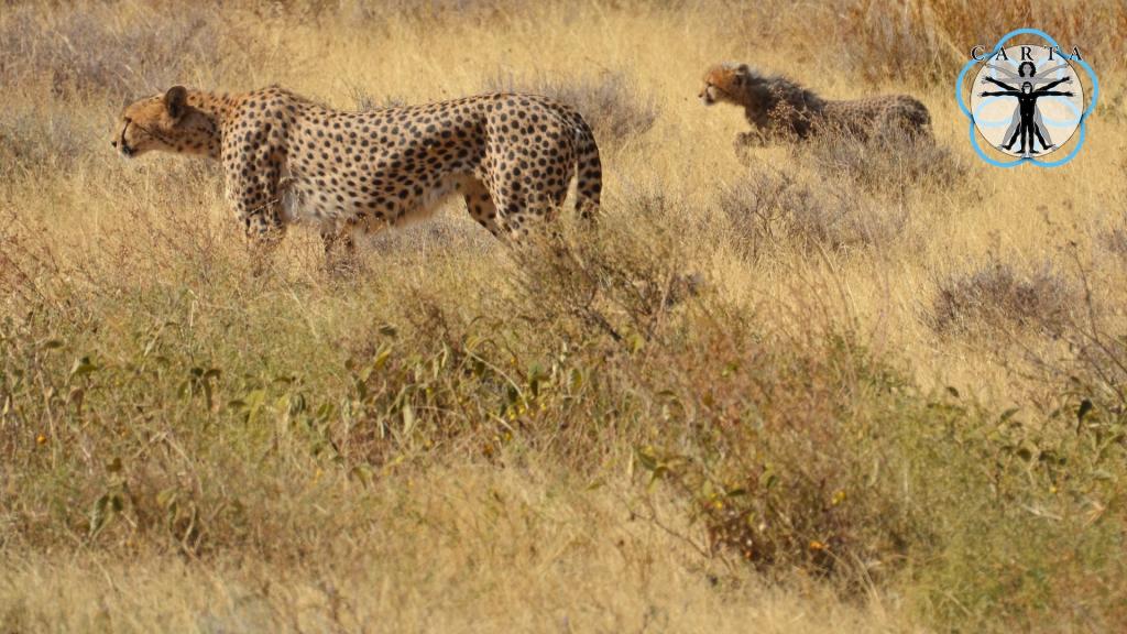 Location: Ndutu Region, Tanzania. Photo credit: Linda Nelson.