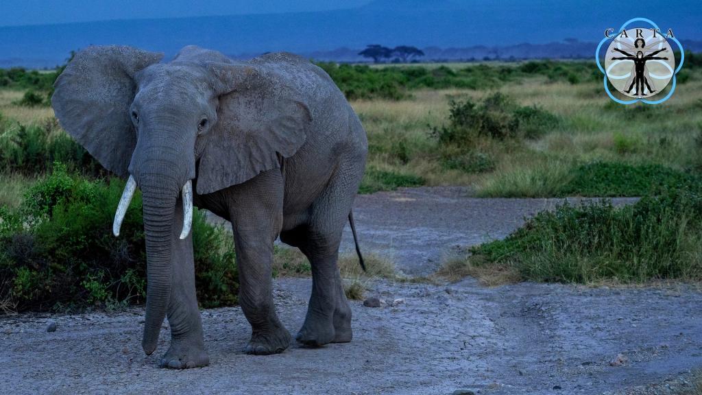 Location: Kenya. Photo credit: Anupam Garg.