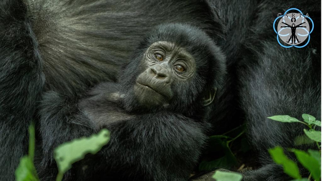 Location: Virunga National Park, DRC. Photo credit: Anupam Garg.