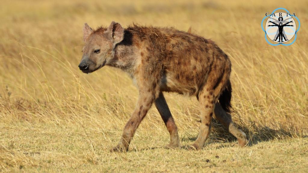 Location: Ngorongoro Conservation Area, Tanzania. Photo credit: Jesse Robie.