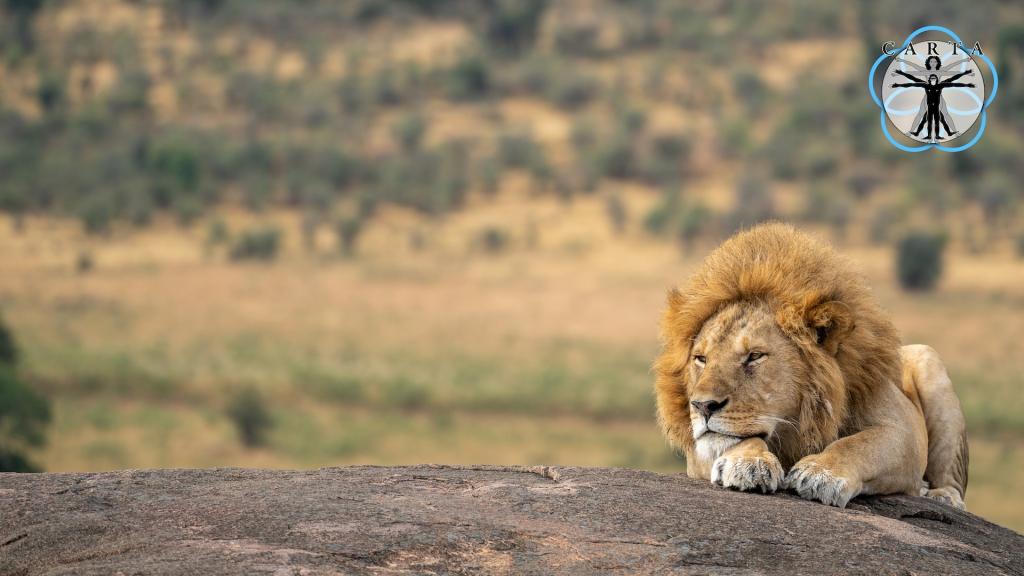 Location: Ngorongoro Conservation Area, Tanzania. Photo credit: Anupam Garg.