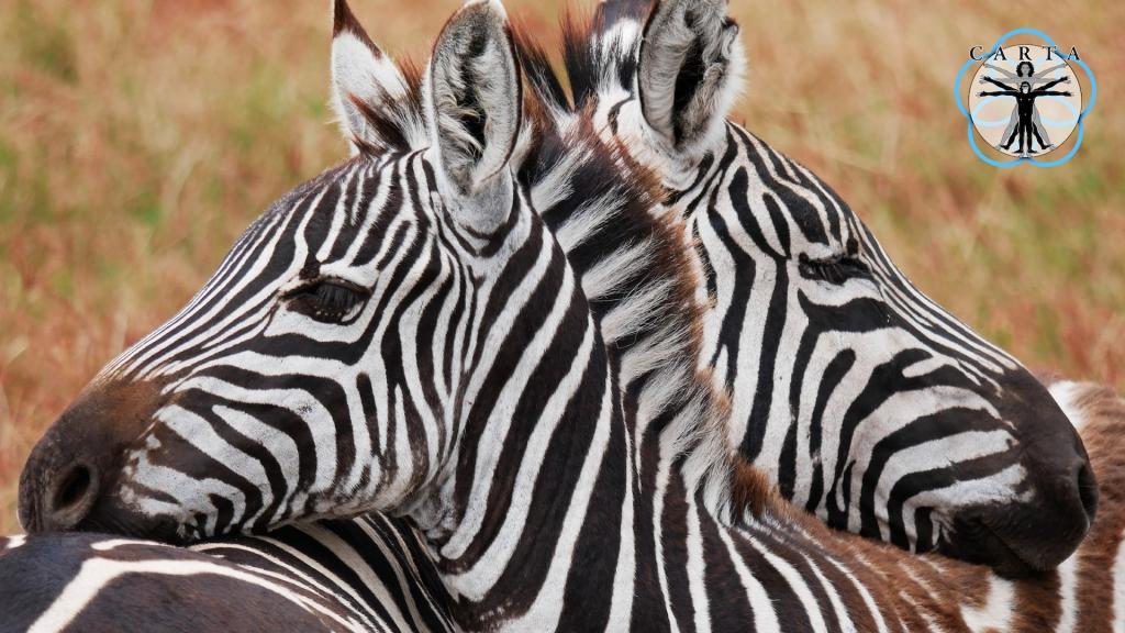 Location: Ngorongoro Conservation Area, Tanzania. Photo credit: Megan Kirchgessner.