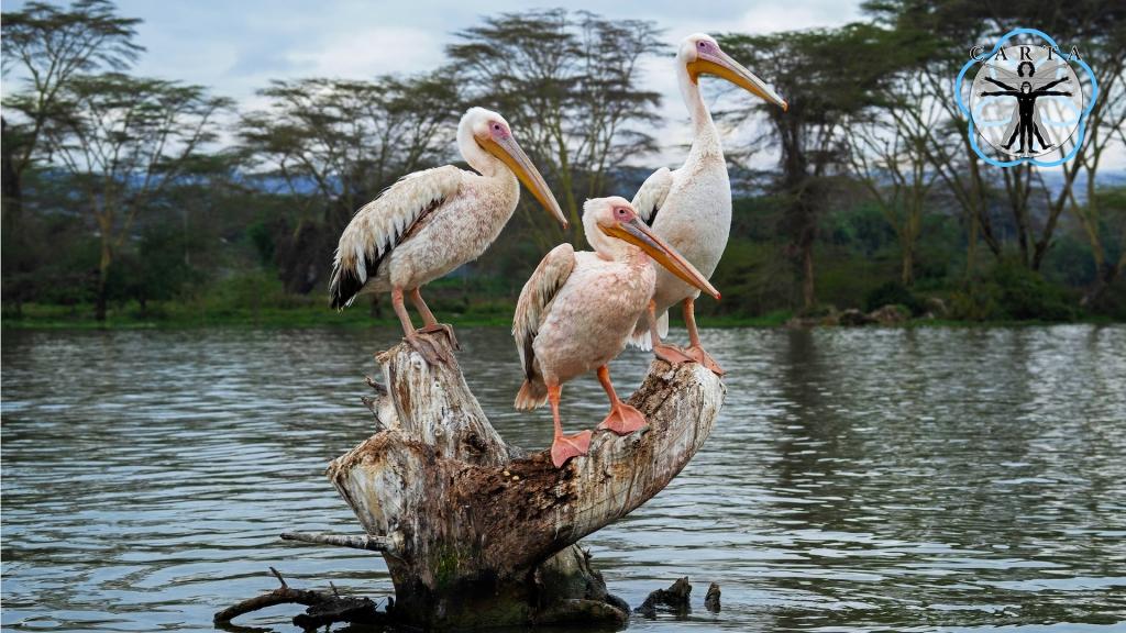 Location: Ngorongoro Conservation Area. Photo credit: Anupam Garg.